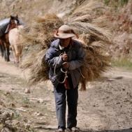 Patacancha, Peru (2010)