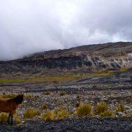 Pastoruri, Peru (2010)
