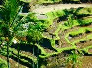 Umbud, Bali (2010)