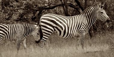 Mosi-oa-Tunya National Park, Zambia (2014)