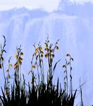 Victoria Falls - Livingstone, Zambia (2014)