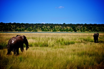 Chobe National Park, Botswana (2014)
